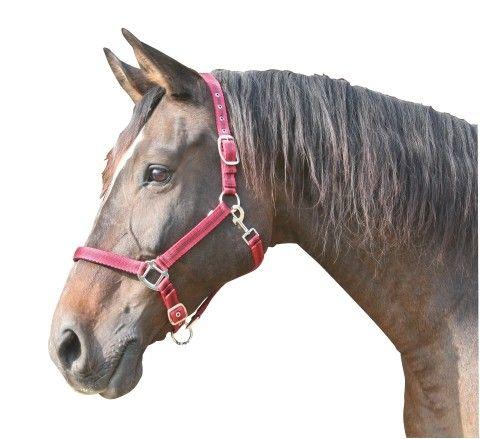 Mustang halster